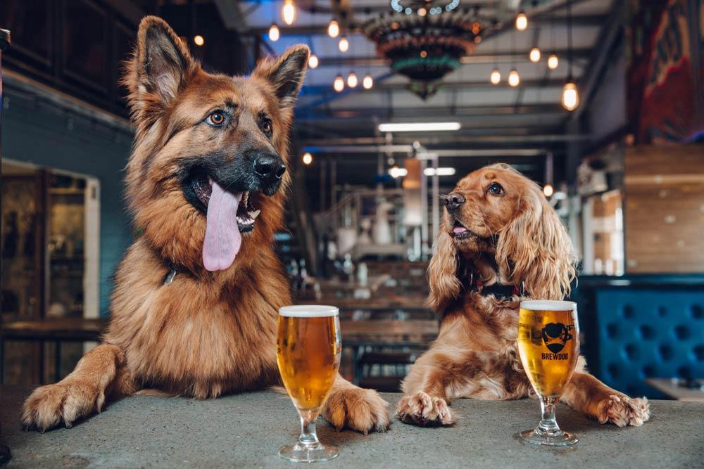 DOG PAWTIES las fiestas de cumpleaños para perros de BrewDog – Loopulo