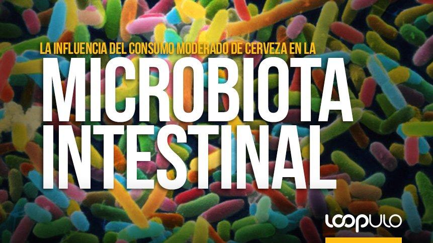 ¿Influye el consumo moderado de cerveza en la microbiota intestinal? – Loopulo