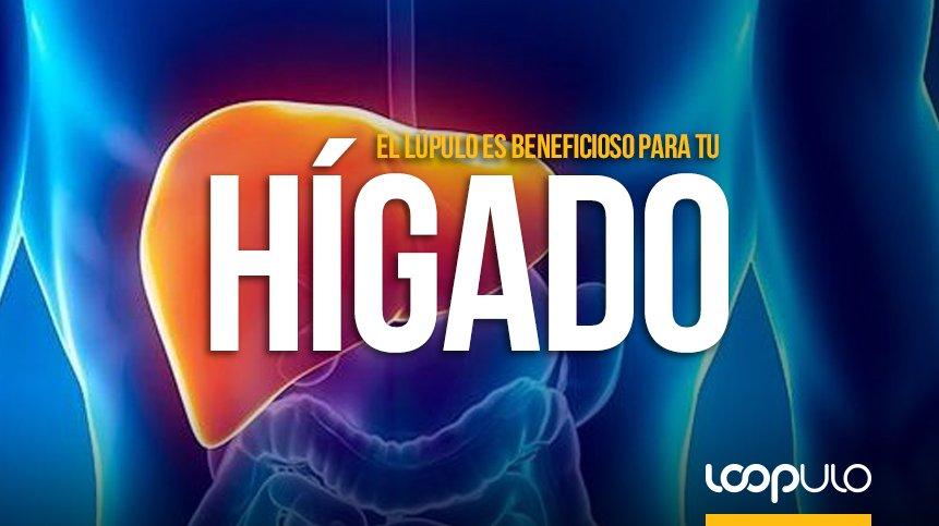 El hígado podría verse beneficiado por los efectos del lúpulo – Loopulo