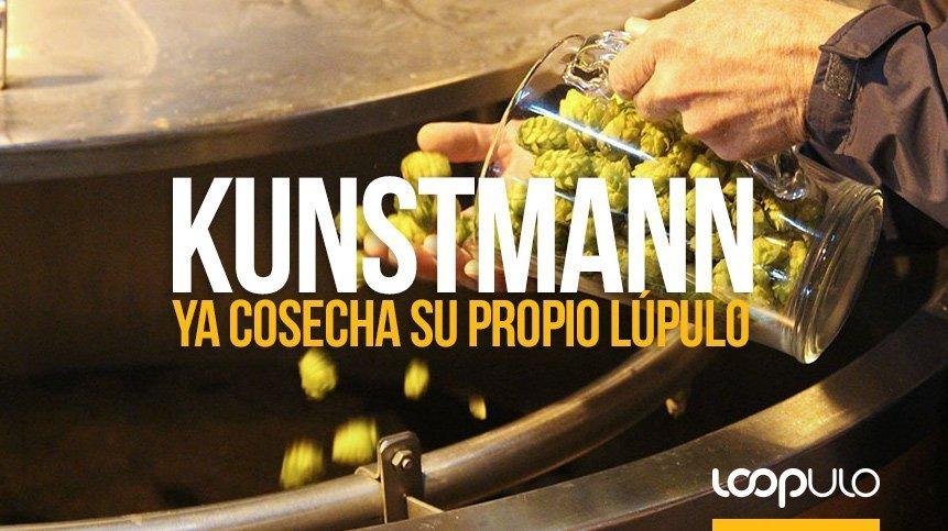 Kunstmann ya cosecha su propio lúpulo en el sur de Chile – Loopulo