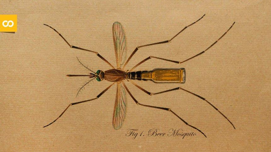 Los mosquitos prefieren a los que beben cerveza – Loopulo