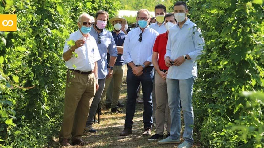 Estrella de Levante promueve el cultivo de lúpulo en Murcia – Loopulo